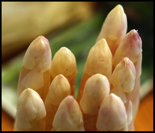 """White Asparagus"" by u m a m i on flickr."